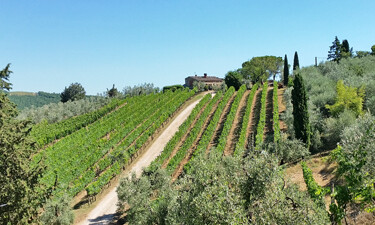 Chianti Altiero Winery SWT 375p