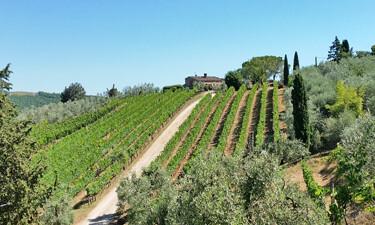 Chianti Altiero Winery SWT 375p
