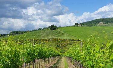The Tignanello Vineyard in Tuscany SWT 02 375
