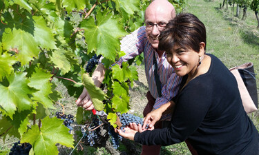 Harvesting grapes on a private tuscany wine tour
