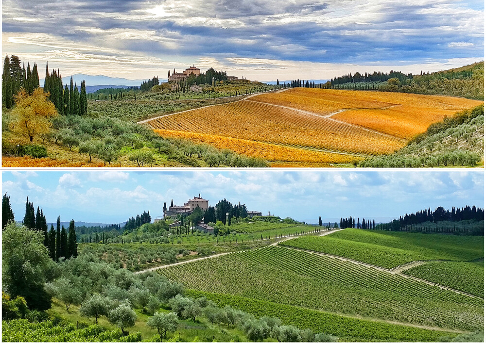 Collage showing alternate best times for a Tuscan wine tour