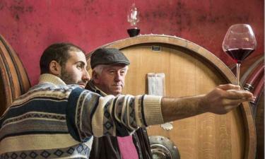 Examining Wine