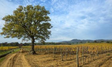 Vineyards in Montalcino