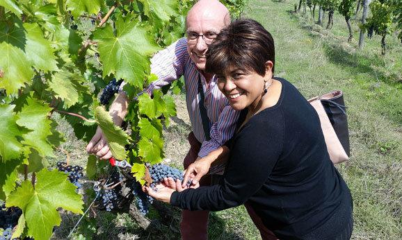 Harvesting Tuscany 578x346 82kb