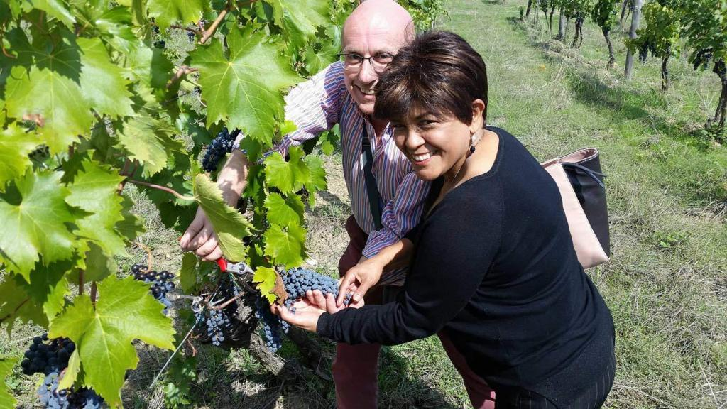 Private Tuscany wine tour harvesting grapes