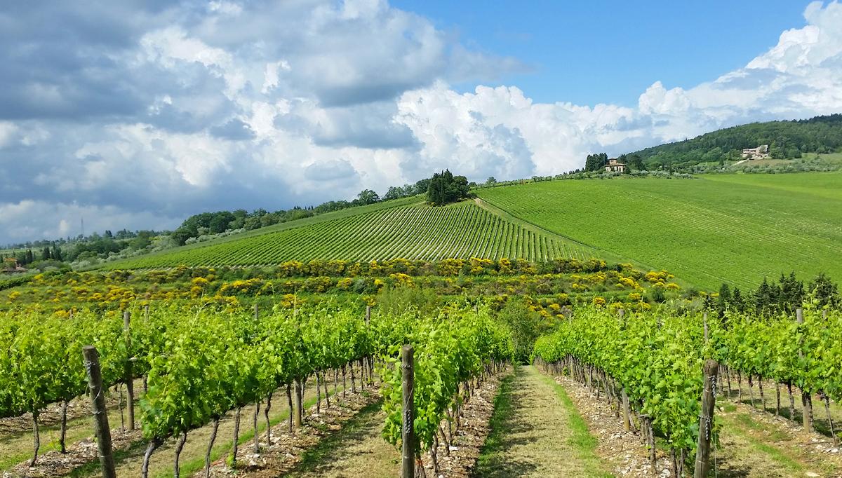 Cheap Wine Tours Tuscany