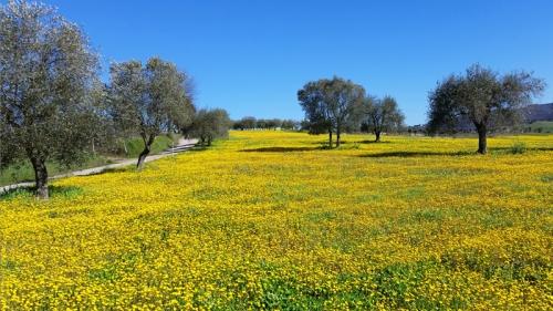Tuscan scenery near Siena April 2018
