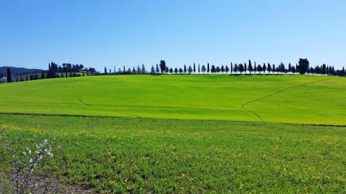 Tuscan scenery near Siena