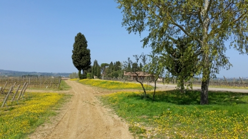A Tuscan scene in April