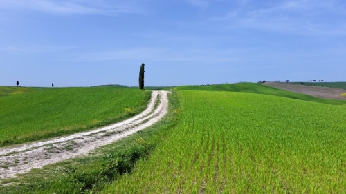 One of Tuscany's most famous photos